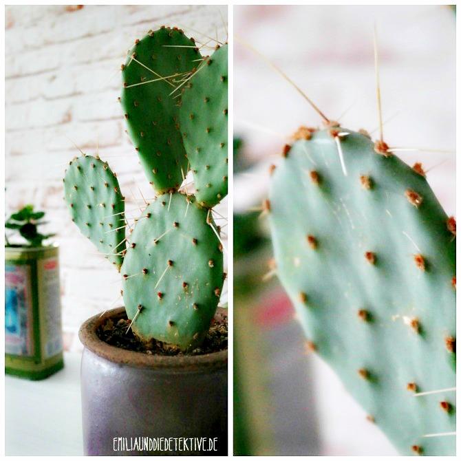 Kaktus_mit_filter